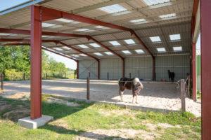 Manège chevaux